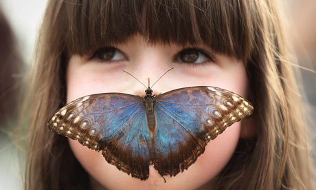 Sensational Butterflies : Tropical Butterflies Displayed At Natural History Museum Exhibition