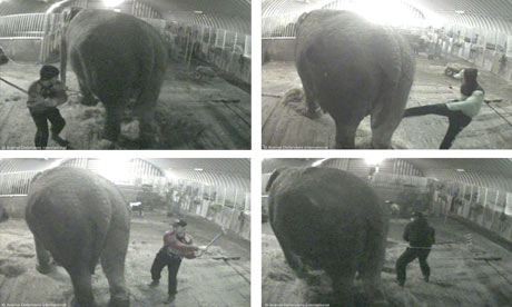 Damian blog : Elephants abused in circus