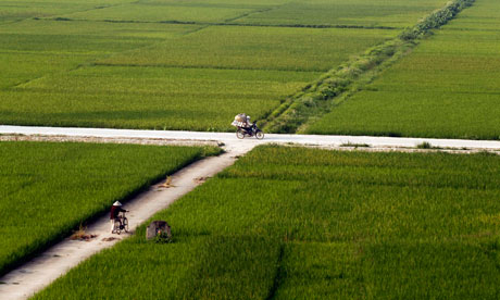 MDG : A farmer pushes a bicycle as he visits a rice paddy field, outside Hanoi , Vietnam