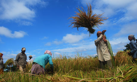 MDG : IFAD on smallholder farmers on the frontline of environment