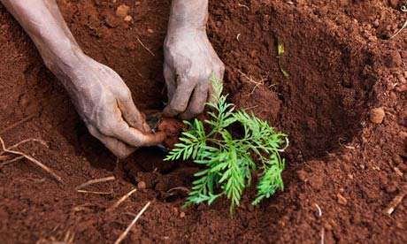 Bonn Diary : A Kenyan plants a tree seedling at Kazi Kwa Vijana forest