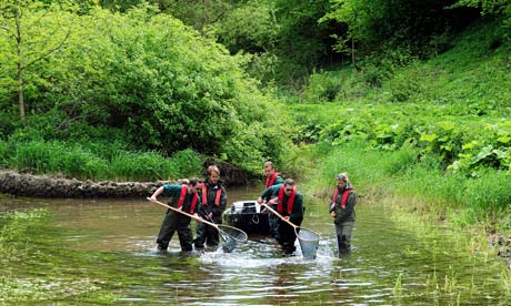 Drought in UK : Fish rescued from River Lathkill