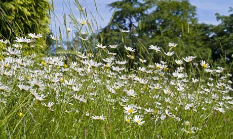 Kew's Millennium Seed Bank launches UK Native Seed Hub