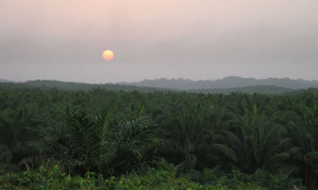 Damian blog : High yielding oil palm plantations could help contain deforestation in Ghana