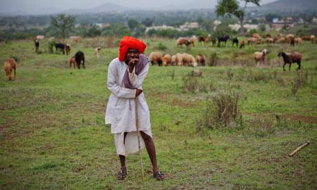 MDG : One year anniversary : A shepherd watching over his sheep, India