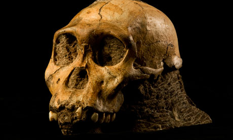 Primitive hominin  : Australopithecus sediba