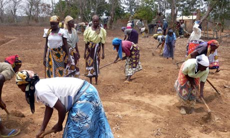 MDG : Mark Tran in Kenya : Farmers practicing digging zai pits in Kitui