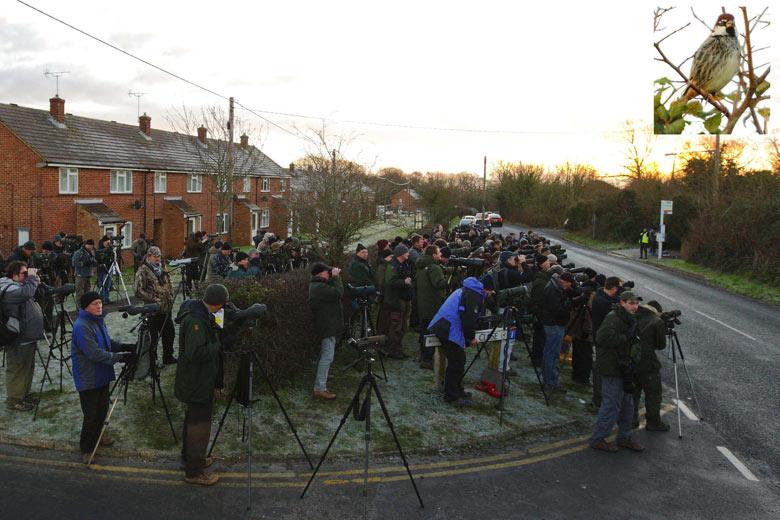 Español gorrión atrae a multitud de aficionados a la ornitología en Calshot cerca de Southampton