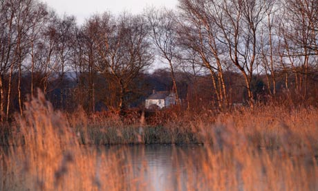 Country Diary : Shapwick Heath nature reserve, Somerset