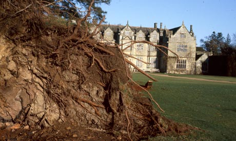 Uprooted trees at at Wakehurst place following the 1987 Storm