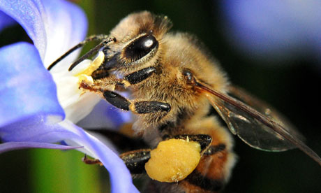 Damian blog about bees and insecticide  : Spring lures out the bees