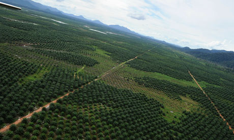 MDG : Indonesia : Biofuel and  huge palm oil concession area
