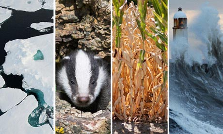 Review of 2012's environmental news