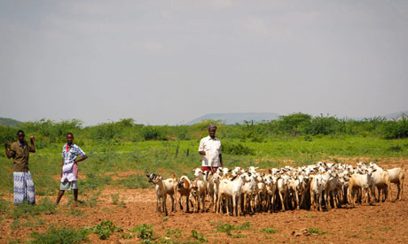 MDG : Somalia : Agriculture : Livestock herders on the fringes of a small livestock market