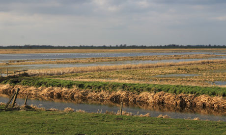 Country Diary : Nene Washes in Cambridgeshire