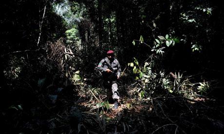 Delito ambiental: la tala ilegal en reserva forestal amazónica del Trairao