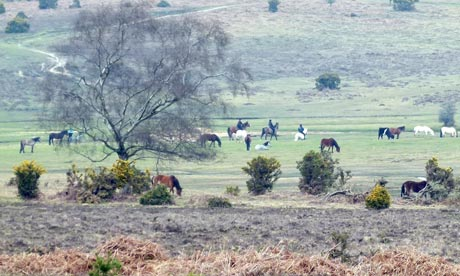 Country Diary : Ponies wandering on the heaths in Ogdens, New Forest