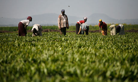 MDG : Land grab in Ethiopia : Palm Oil Plantations And Workers