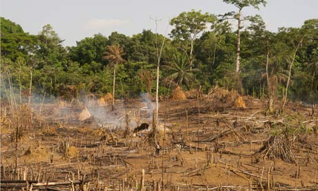 MDG : Liberia : Deforestation on the edge of Sapo National Park