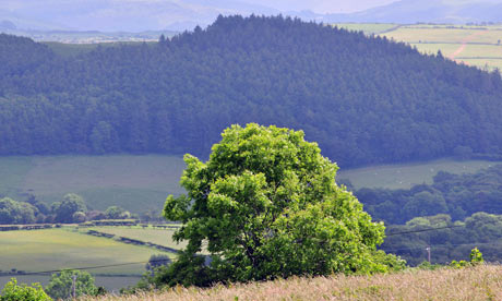 Country Diary : The colours of Coed y Cwm - Cwm Woods