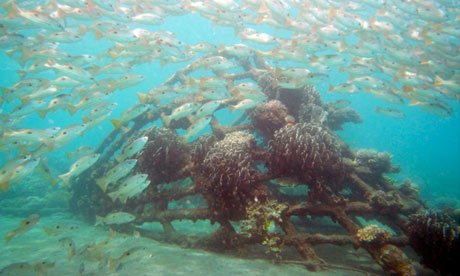 Coral reef restoration Biorock project at Ibu Karang, Pemuteran, Bali, Indonesia