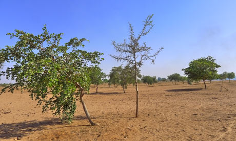 MDG : Senegal : fighting hunger with trees in Kaffrine