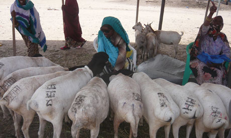 MDG : Mark Tran in Somaliland : breeding and raising livestock industry