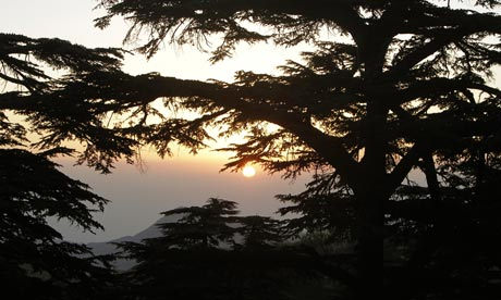 Lebanon's cedar trees under Threat  The sun sets over the Lebanese Cedars near Besharre