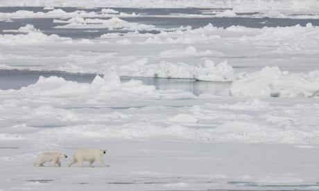 John Vidal in Arctic blog : Polar Bears on the Fram Strait Sea Ice