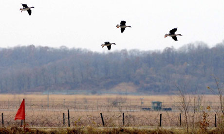 A herd of wild ducks fly over barbed wire fences in Paju near the demilitarized zone (DMZ)