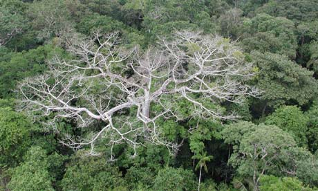 Amazon rainforest shows signs of degradation due to climate change says NASA