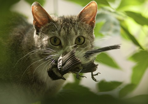 Stop Killing Birds Cat Collars Australia