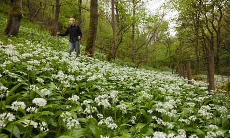 Country Diary : Wild garlic and orchids are out in abundance when spring comes, Derbyshire