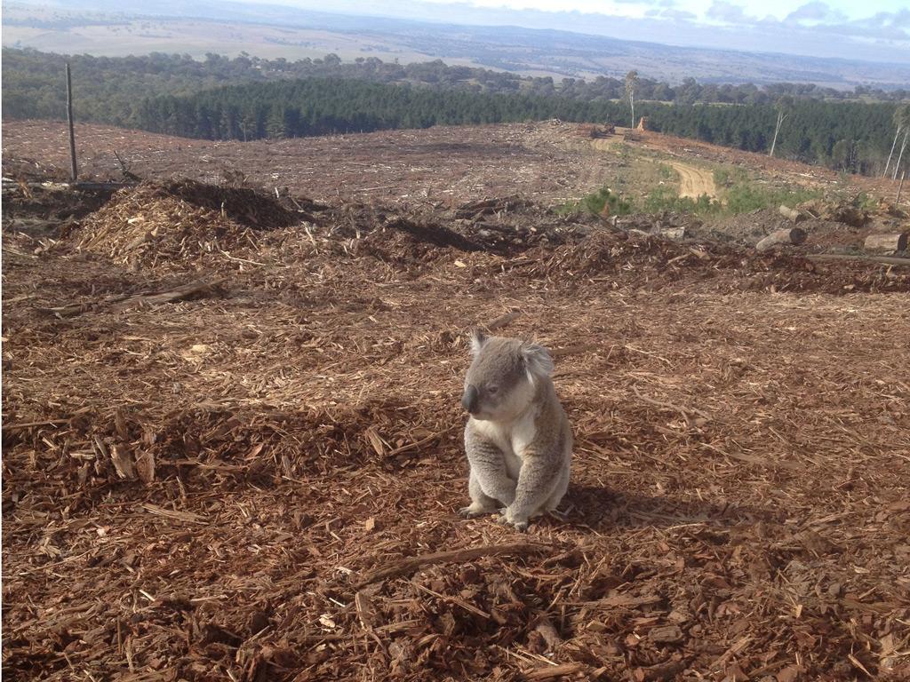 speech on hazards of deforestation