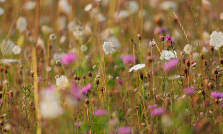 Monbiot blog on The State of Nature : lowland meadow in England and Wales
