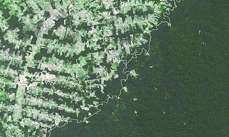 Amazon clearance for agriculture is 'economic own goal' for Brazil | the guradian