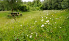 Country Diary Archive : wild flower meadow in Derbishire