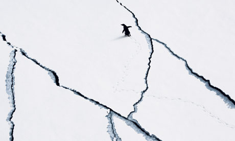 Planete Oz blog : about plan for a massive protected area in the Antarctica : Adelie penguin