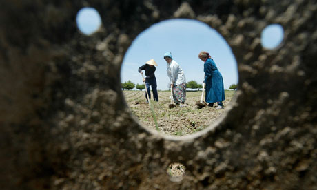 MDG : Trafficking in Persons (Tip) report : Cotton field in Uzbekistan