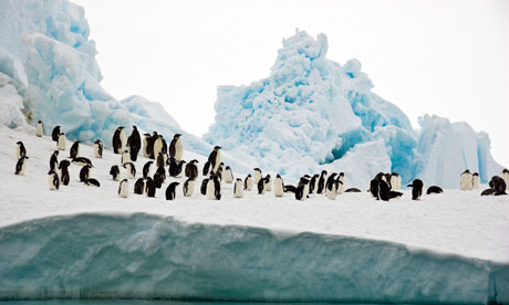 Antarctic marine sanctuaries : Adelie and emperor penguins, Bay of Whales, Ross Sea, Antarctica