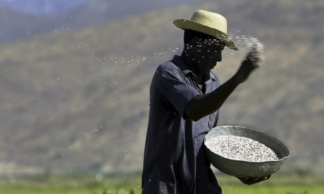 MDG : A man throws fertiliser on a rice field in the Artibonite valley in central Haiti