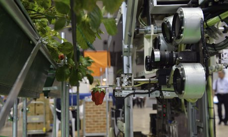 Robot in farming : robot to harvest strawberry