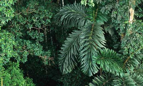 The Rainforests there are life