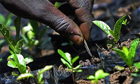 Planting trees for a carbon offset project in Kenya