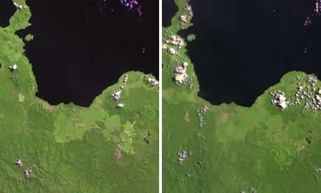 New Britain rainforest
