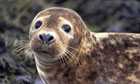 Marine Harvest agrees to limit pesticides and seal killings