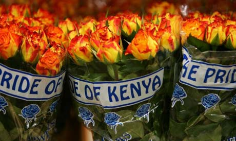 Cut flowers from Kenya