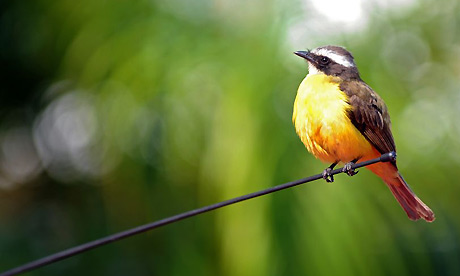 Readers recommend: Songs about birds | Music | The Guardian  Birds