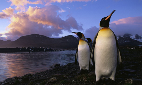 South Georgia and the South Sandwich Islands are home to king penguins. Britain has been ignoring its 'moral duty' to protect the island's biodiversity according to MPs
