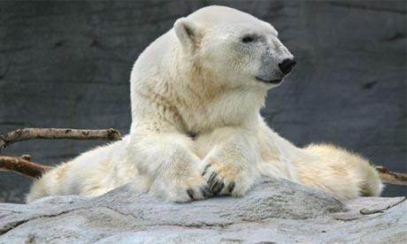 Debby the polar bear, who has died at 42